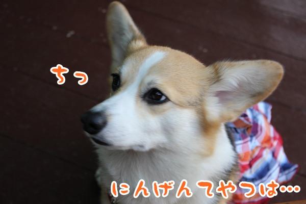 IMG_1674.jpg