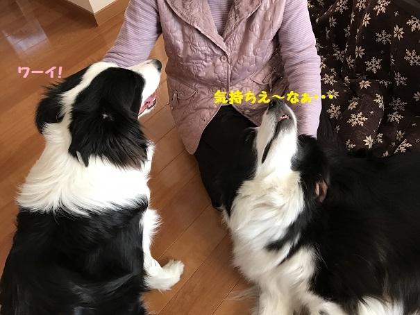 IMG_1273_20170330201414bd1.jpg