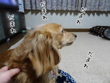kinako7074.jpg