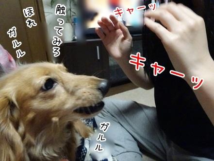 kinako7077.jpg