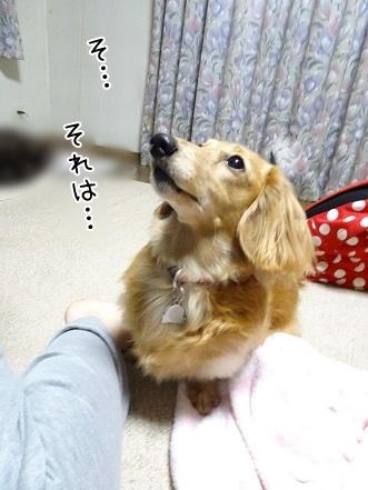 kinako7080.jpg