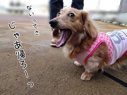 kinako7097.jpg