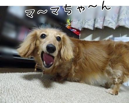 kinako7342.jpg