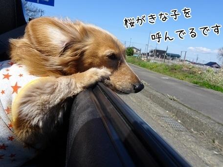 kinako7362.jpg