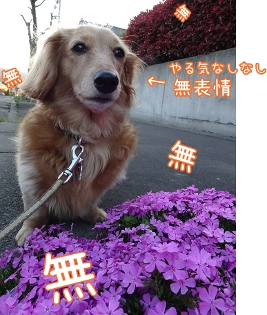 kinako7387.jpg