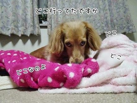 kinako7394.jpg
