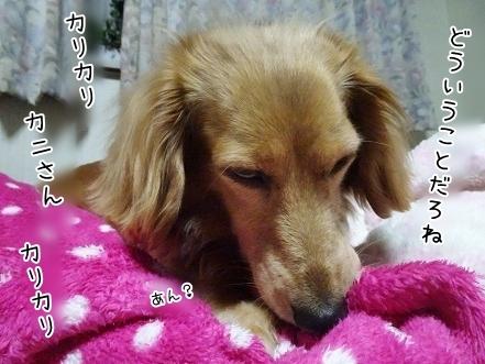 kinako7398.jpg