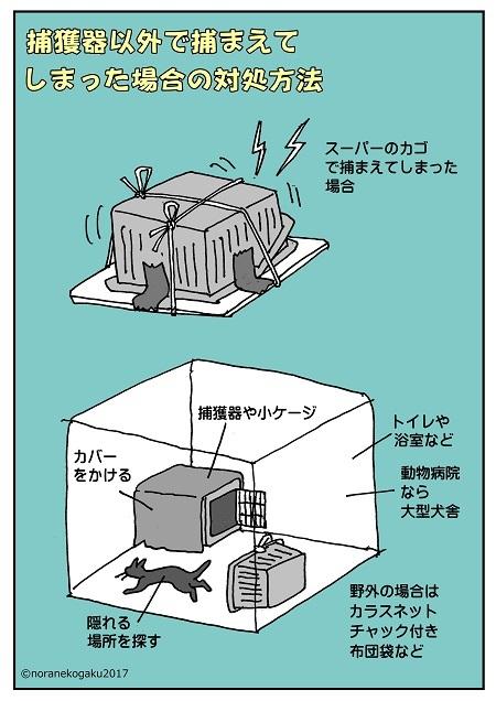 野良猫 捕獲 方法