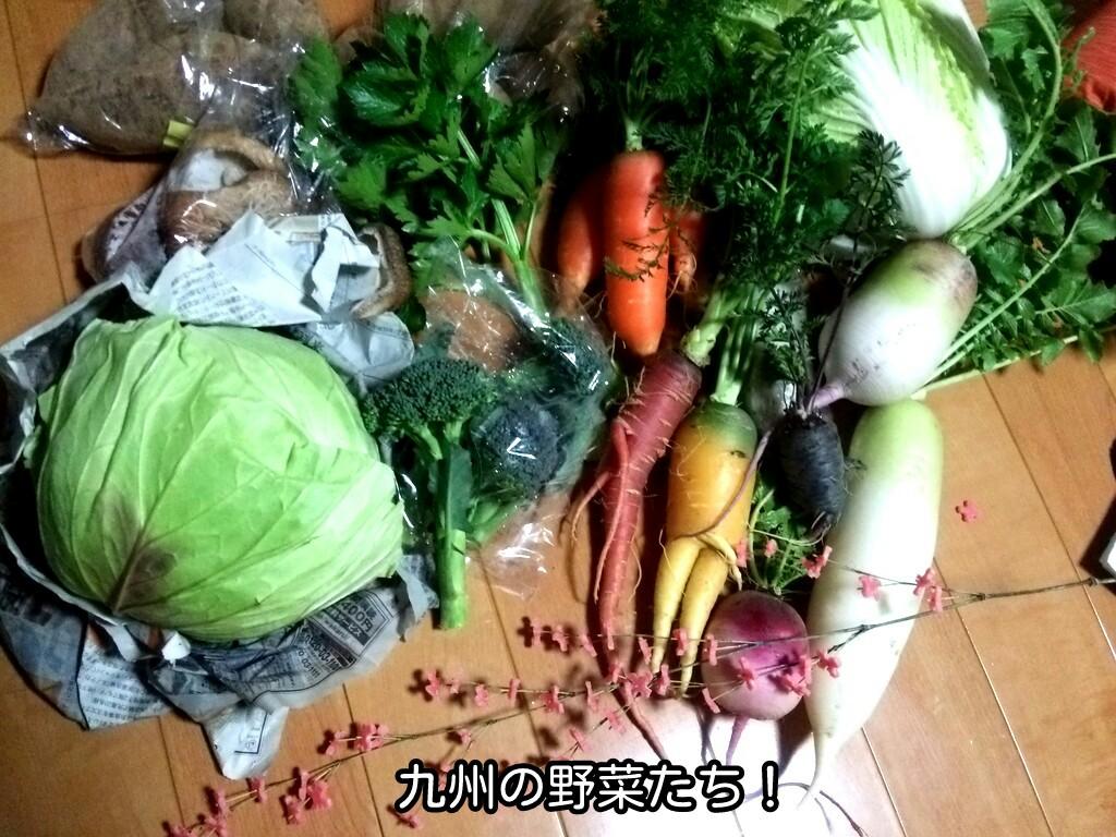 九州の野菜たち!
