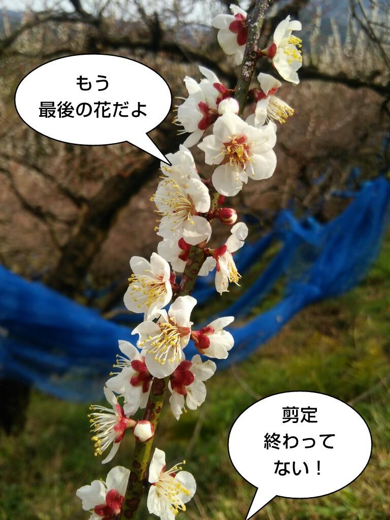 もう最後の花だよ