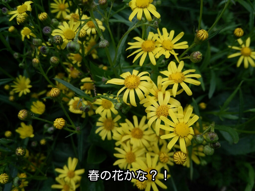 春の花かな?!