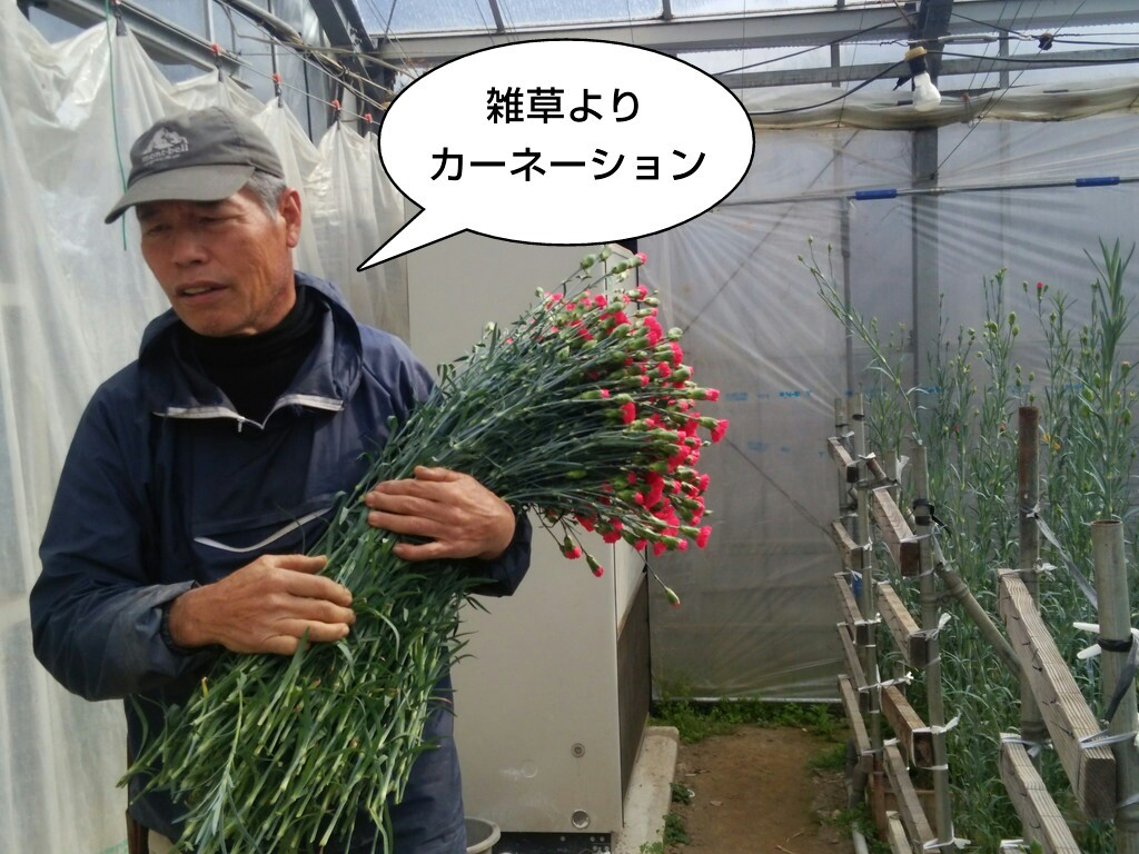 雑草よりカーネーション