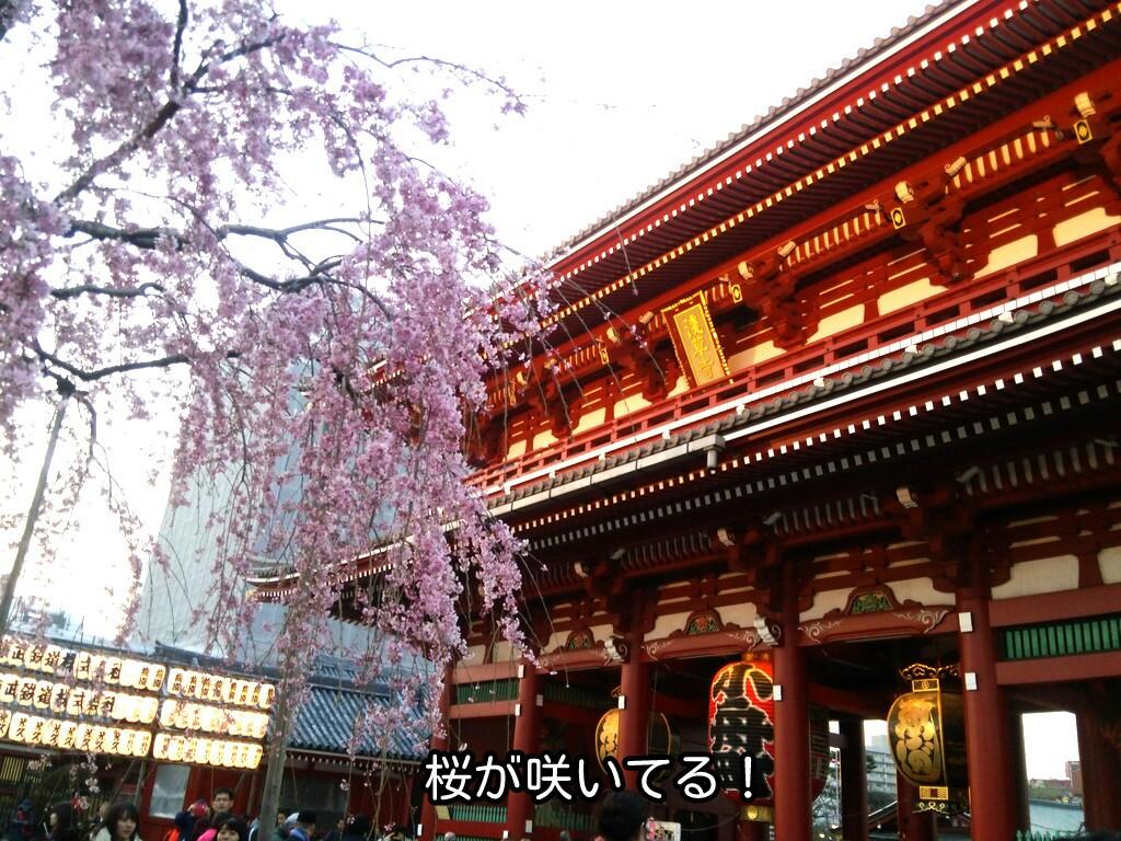 桜が咲いてる!