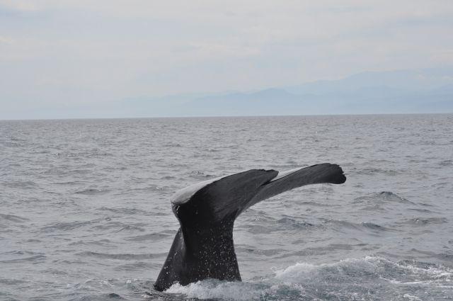 【東京湾】千葉港に13メートルの「クジラ」現る!東京湾での目撃は6月以降「16件目」