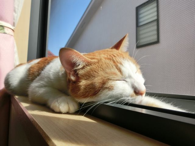 【研究】夢は「レム睡眠」のときに見ているは嘘だった!夢の内容までもが特定できる?