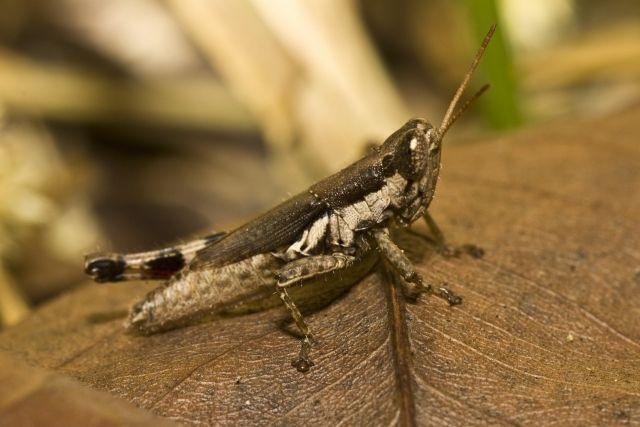 みんなで「虫」を食べよう!広がる昆虫食…食糧問題の解決に国連も注目