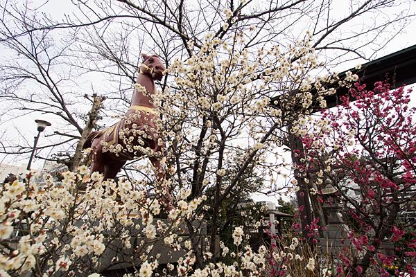 榎白山神社神馬像と梅