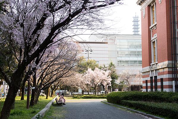市政資料館と早咲きの桜