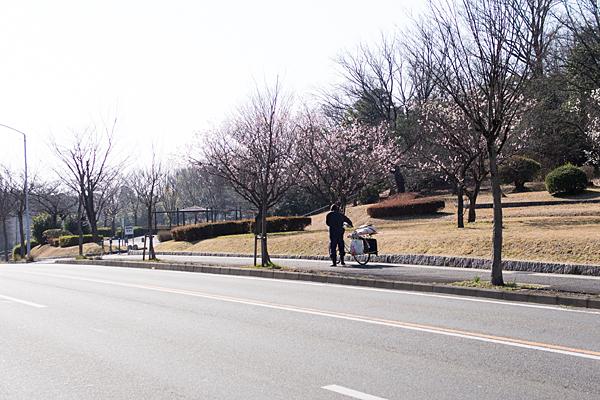 平和公園近くの道路梅の咲く頃