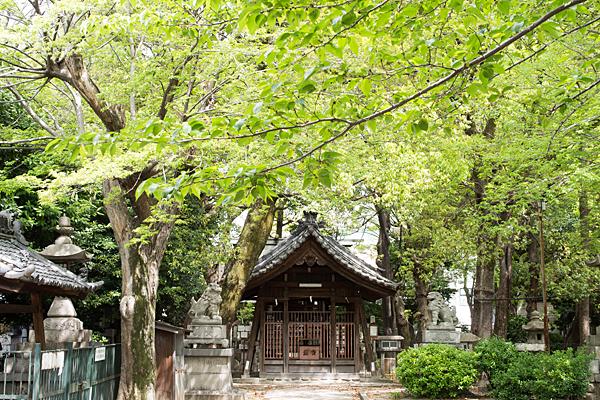 椿神明社新緑と拝殿