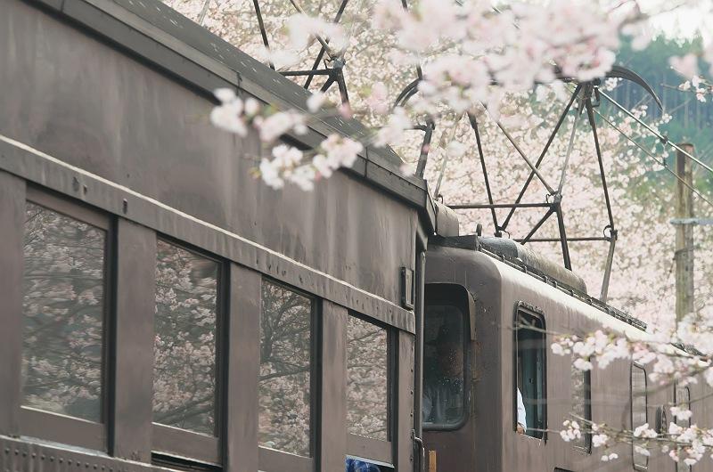 通り過ぎてゆく桜の季節