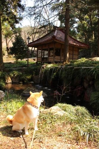 藤垈の滝11
