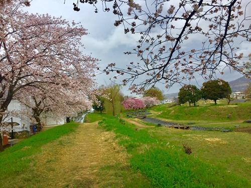散歩道の桜(4月7日と4月8日)