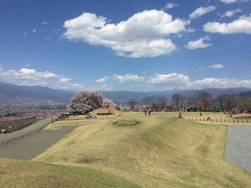 クウちゃんとお花見(八代ふるさと公園)