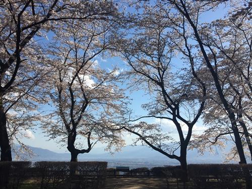 クウちゃんとお花見(里山)