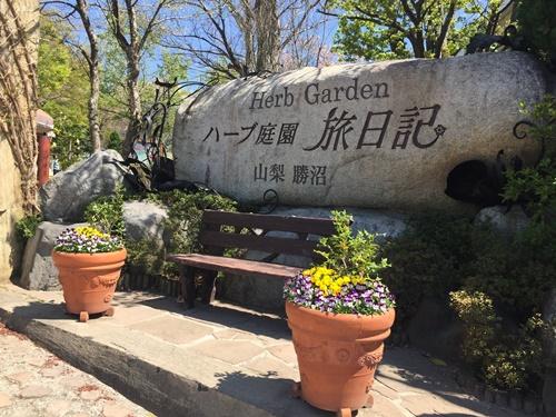 クウちゃんとお花見(ハーブ庭園旅日記・チューリップ)