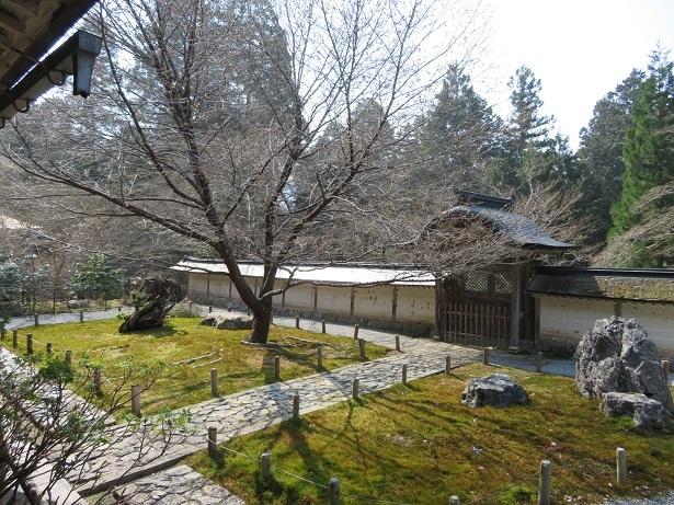 常照皇寺の御車返しの桜