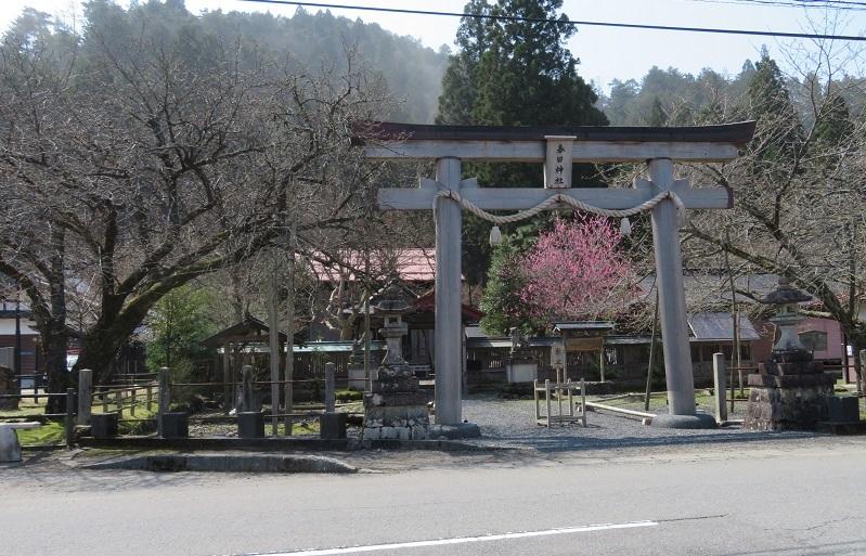 春日神社と黒田百年桜