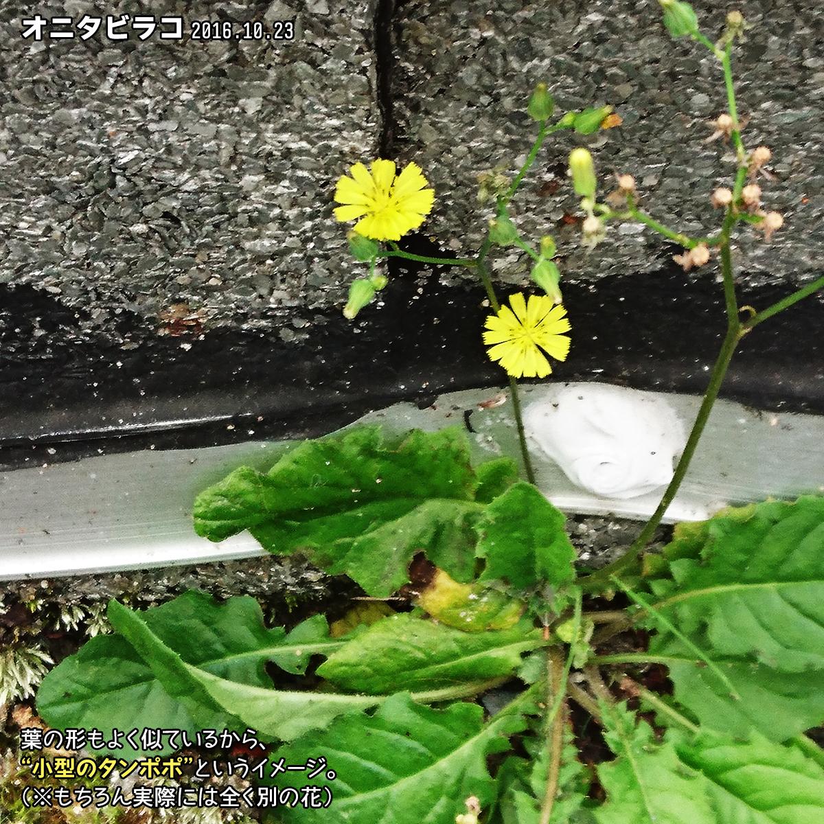 DSC_0307_2.jpg