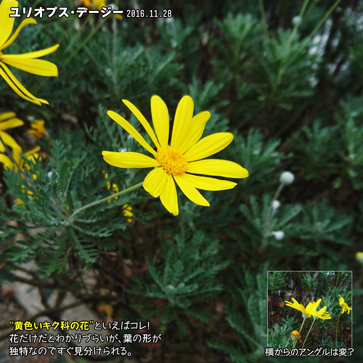 DSC_0605_1.jpg