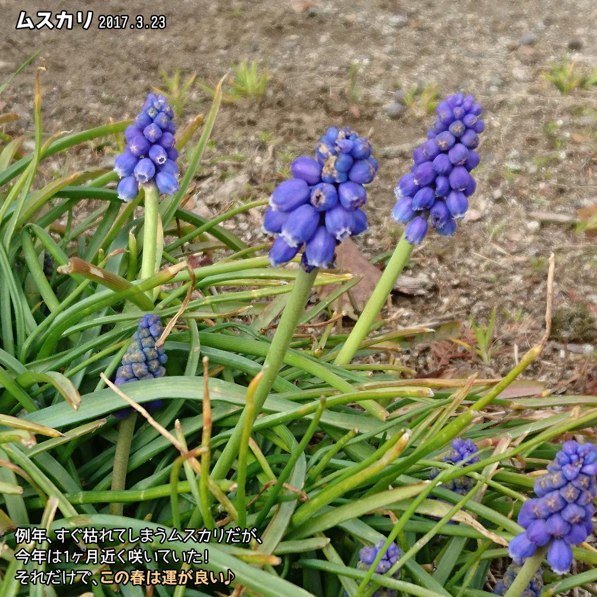 DSC_2080_20170420160342508.jpg