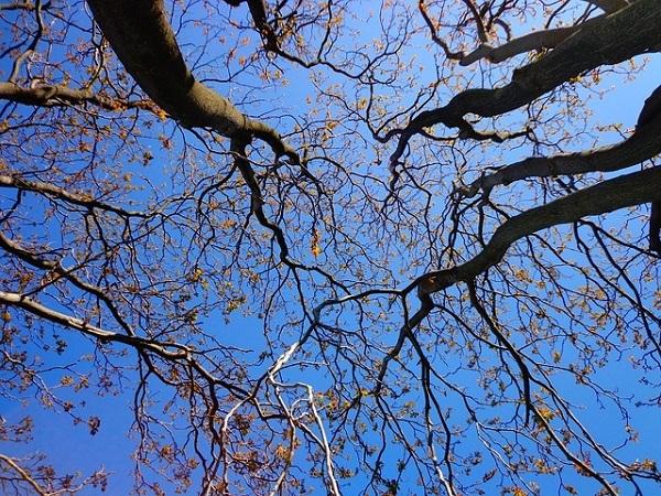 フリー画像・見上げる青空