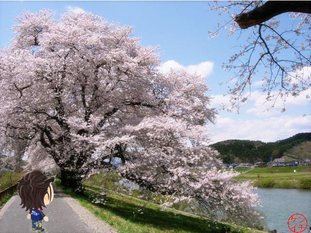 全国でお花見を楽しむ人は〇〇〇〇人01