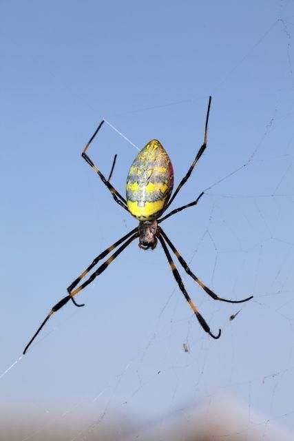 クモの糸を混ぜた「スパイダーシルク」が強い?