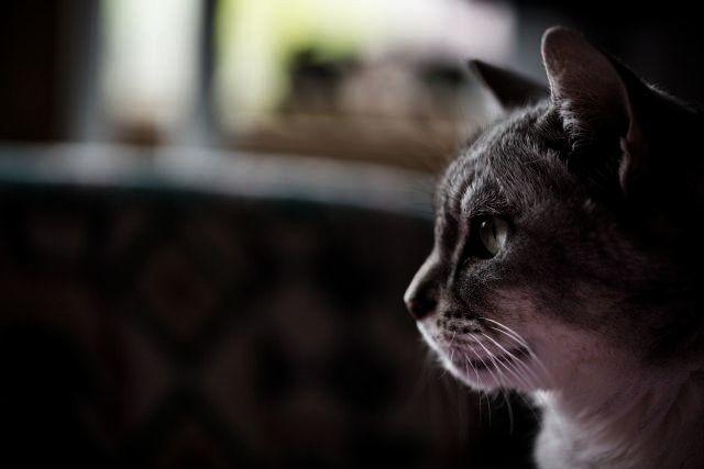 猫の瞳の形のハイテク機能?