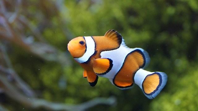 魚は性転換するって本当?
