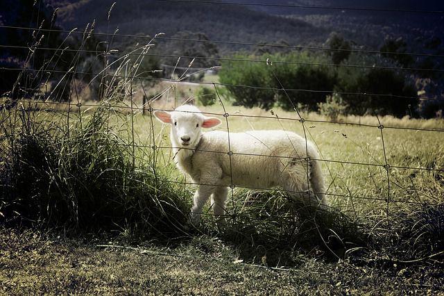 「亡羊補牢」とは?