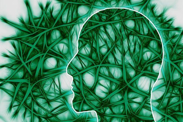 脳細胞 ニューロン