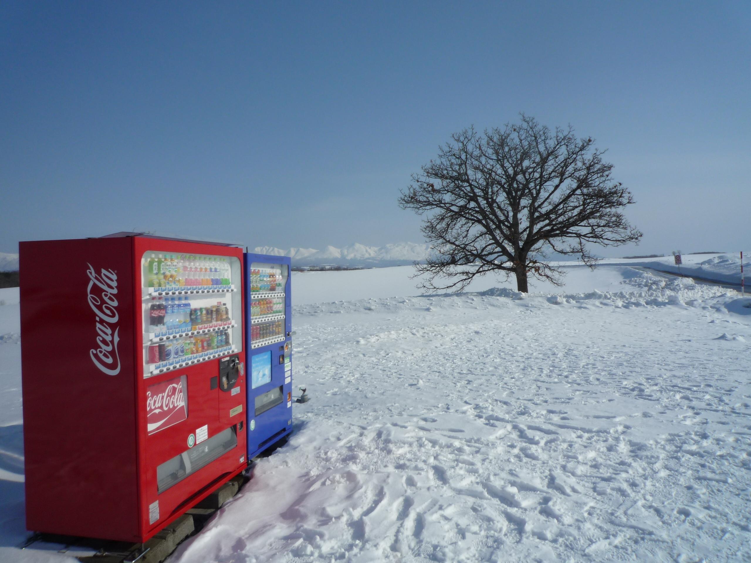 木と自販機