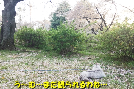 2017041900245359c.jpg