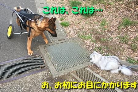 20170419002532227.jpg