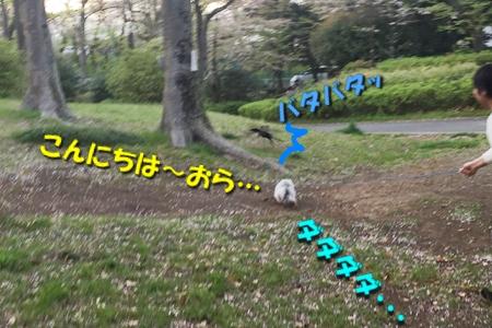 201704200243135c1.jpg