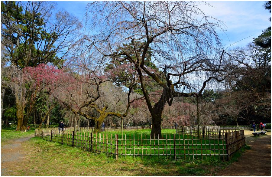 京都府立植物園・助手1