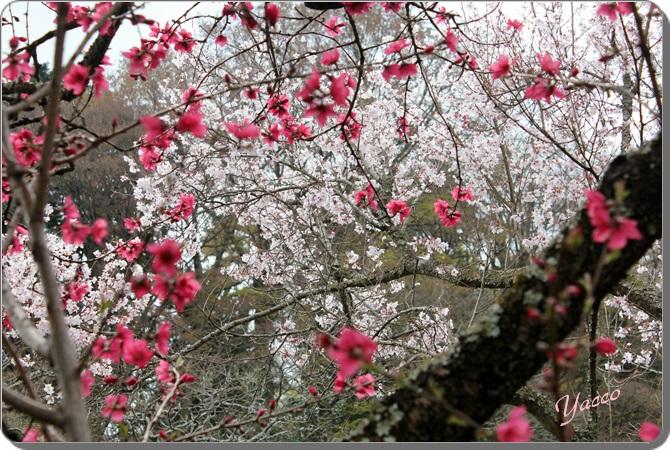 春の東慶寺