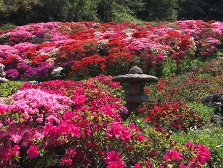 花の木公園のつつじ