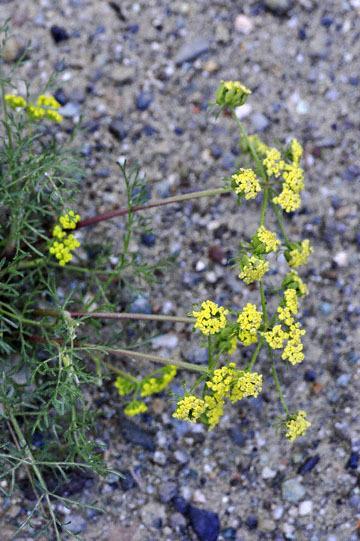 blog 28 Bear Valley, Sanickle ?2_DSC6557-4.14.16.jpg